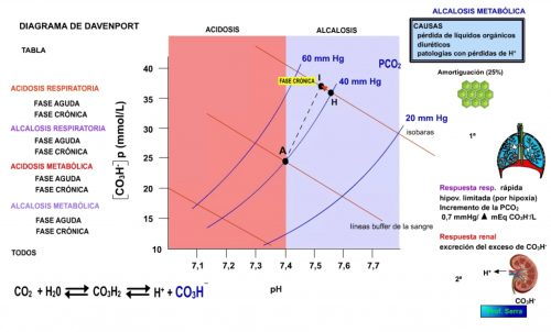 Alcalosis metabólica. Fase crónica.
