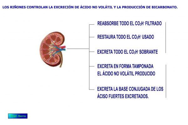 Control renal del pH