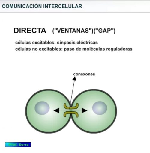 comunicación directa