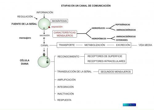 etapas de un canal de comunicación