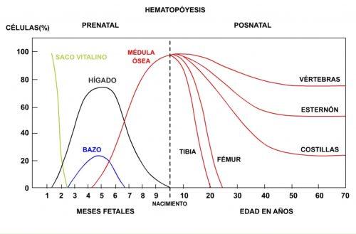 Producción de eritrocitos