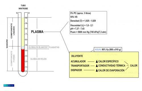 Funciones del agua plasmática.