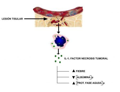 Proteínas inflamatorias.