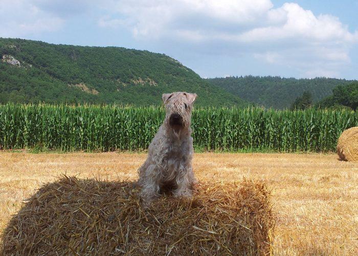 Happy Wheatenlove