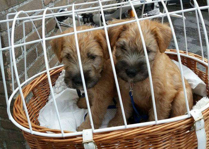 Pups Socialiseren