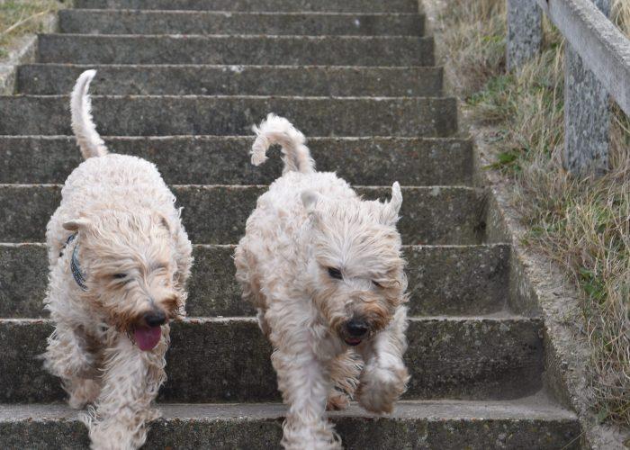 Wheatenlove Happy en Norah op stap