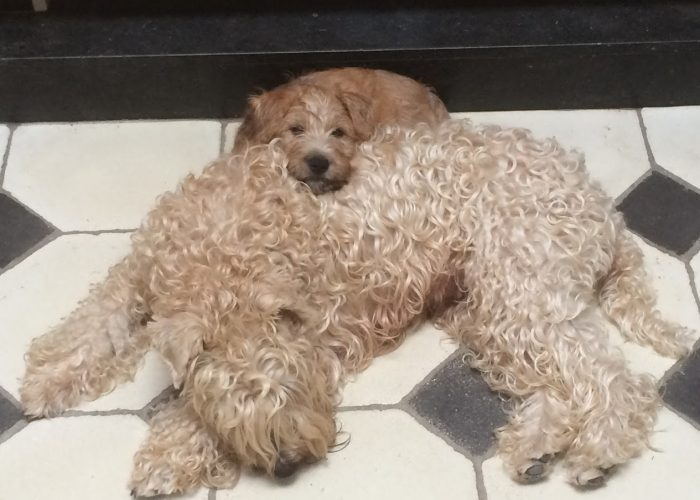 Mum and daughther Wheatenlove Queen Bo