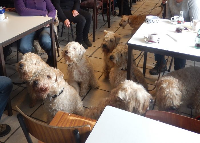 De Wheaten hondenschool! Uniek
