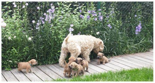 U pupjes vijf weken
