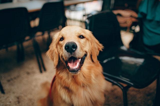 Medtænk hunden i boligdrømmene