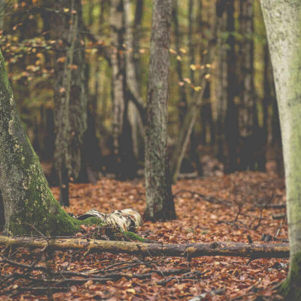 bushcraft yoga naturverbindung leave no trace überlebenstraining für einsteiger Rostock survival abenteuer feuer wild wandern camping wald natur