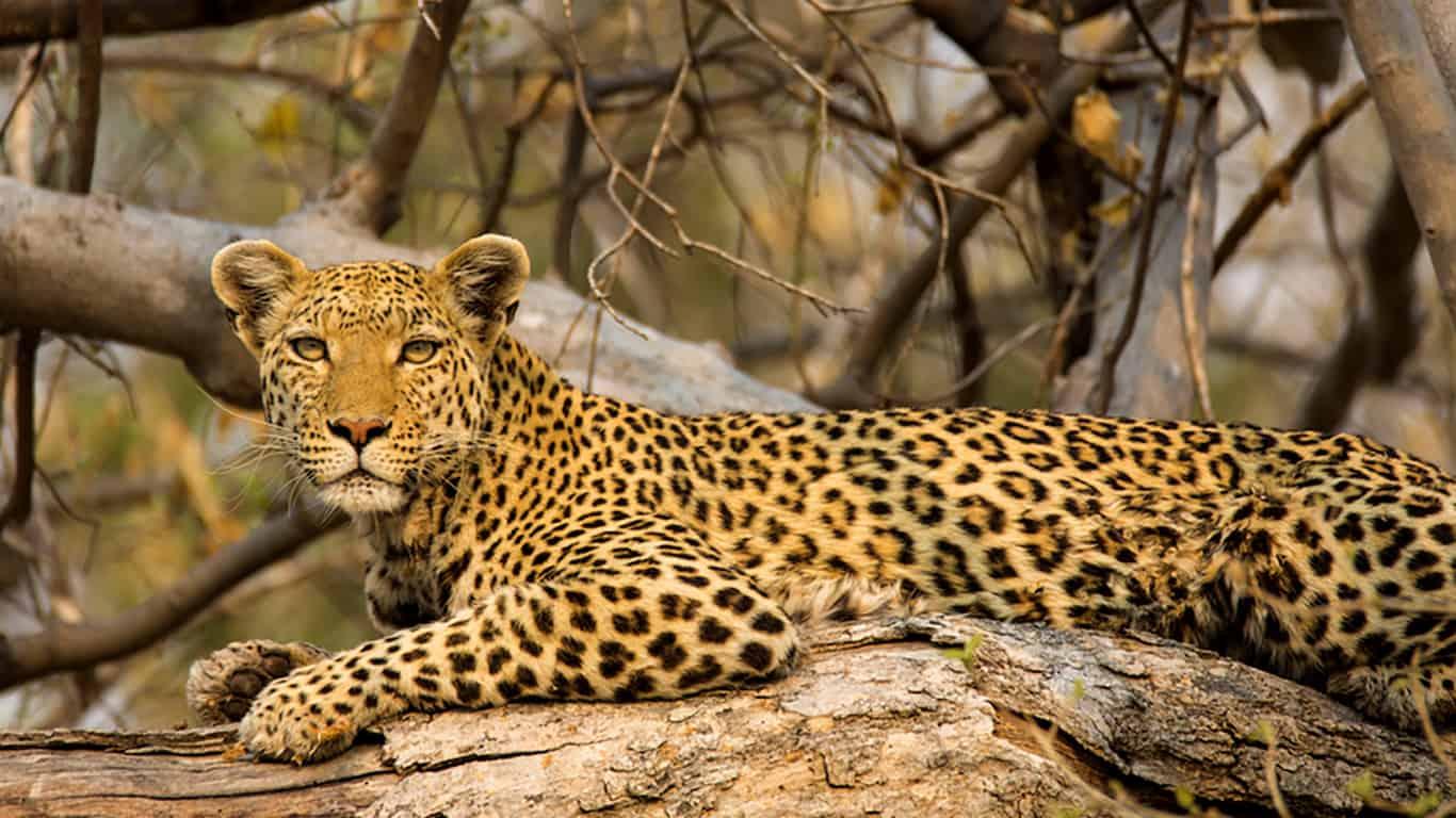 Viaggio fotografico Botswana –  Agosto 2019