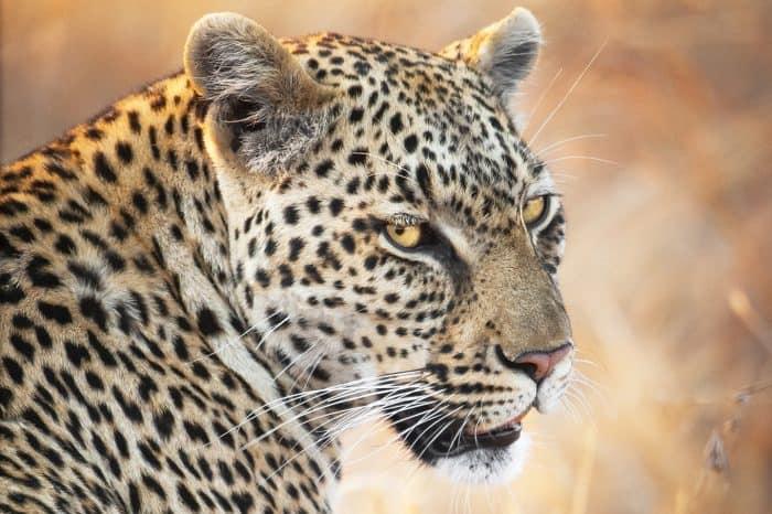 Viaggio fotografico Sudafrica  <ul> Alla ricerca dei Big Five ( Manyeleti)