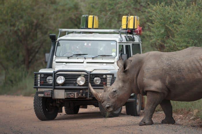 Kruger National Park – Rhino Photo Tour