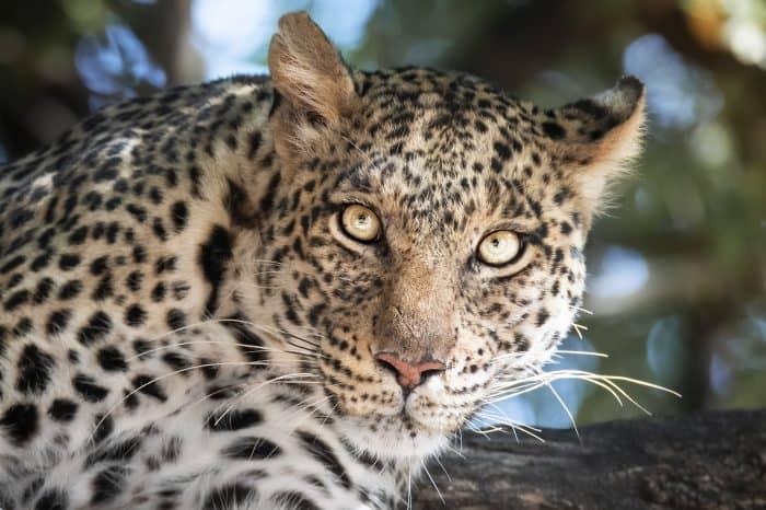 Viaggio fotografico Sudafrica e Botswana Predators Photo Tour