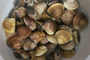 clams photo: ©️Nel Brouwer-van den Bergh