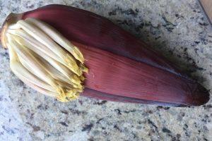 banana blossom : ©️ Nel Brouwer-van den Bergh