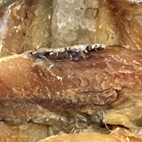 3 month salt cured anchovies ©️ Nel Brouwer-van den Bergh