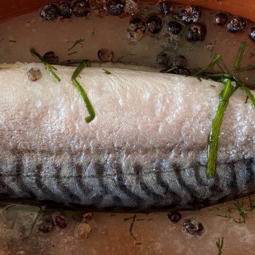 Gravad mackerel ©️ Nel Brouwer-van den Bergh