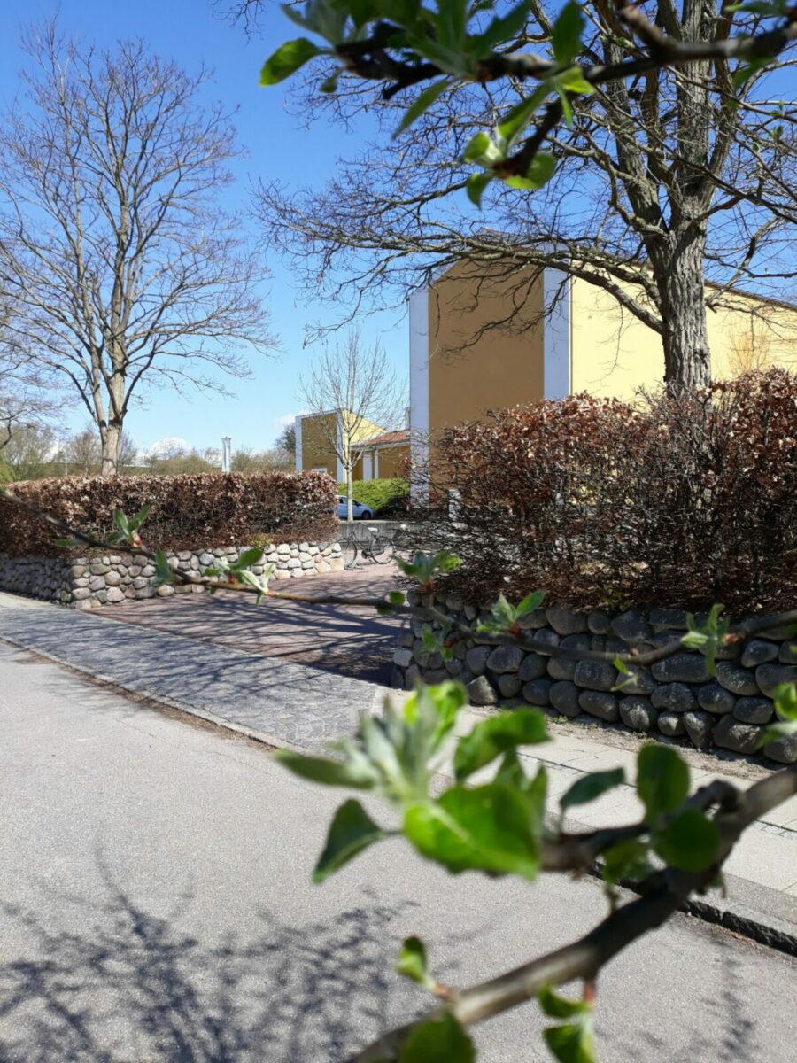 Willumsens Museum set udefra med friske forårsgrene i forgrunden