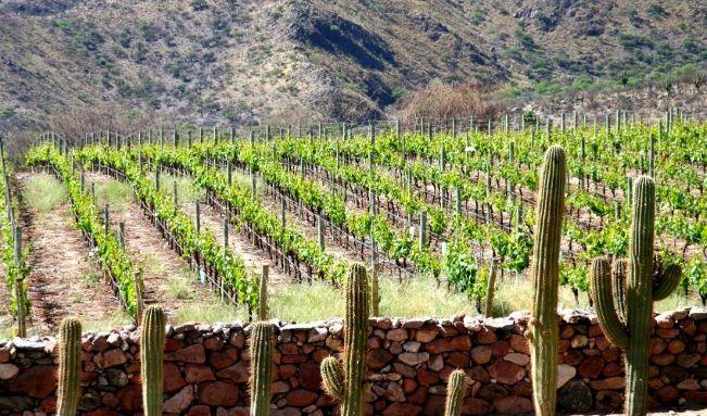 Argentisk vinmark i Salta over trægræsen