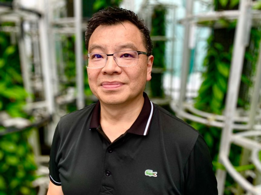 A man wearing glasses and a black polo looks at the camera, surrounded by trellises.