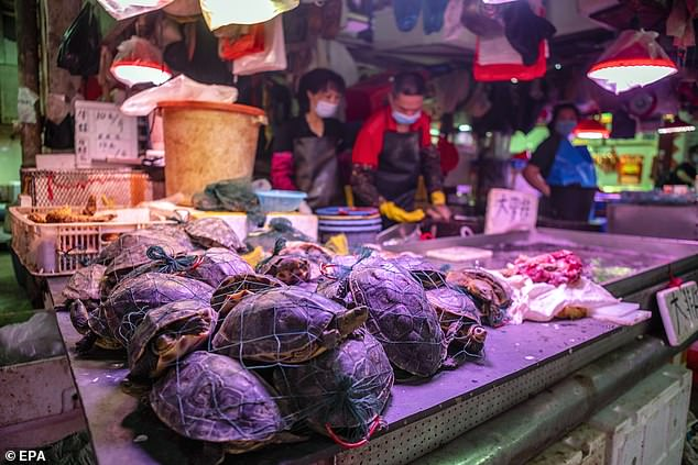 Originally Chinese authorities said the first cases of the virus emerged at the local seafood market, but a new investigation of the animals being sold ruled that out