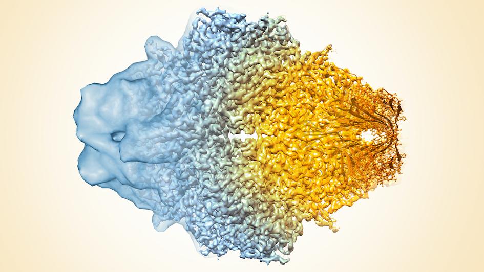 Composite image Cryo-EM