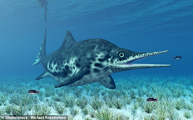 An artist's impression of a ichthyosaur reptile as it existed during the Jurassic period, 251 million to 145.5 million years ago