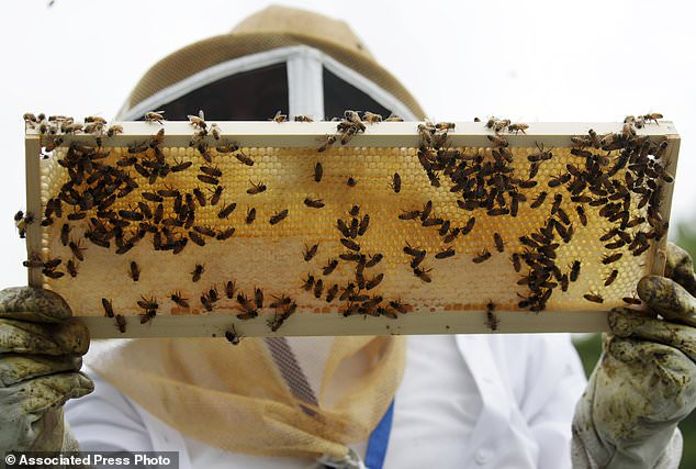 According to bee experts, a healthy winter loss rate for bee colonies is between 5% and 10% but the US average for the last 14 years has been 28.6%