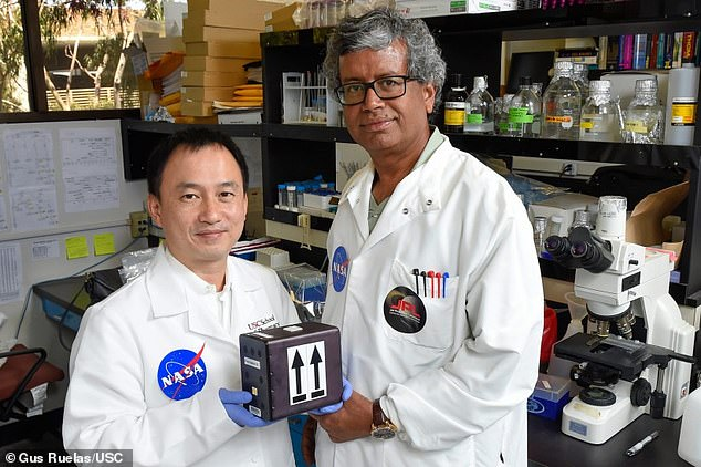 Kasthuri Venkateswaran, a research scientist at NASA (right) and Professor Clay Wang of the University of Southern California (left) sent samples of the fungi into the International Space Station to see if it mutated further under the hiked radiation levels