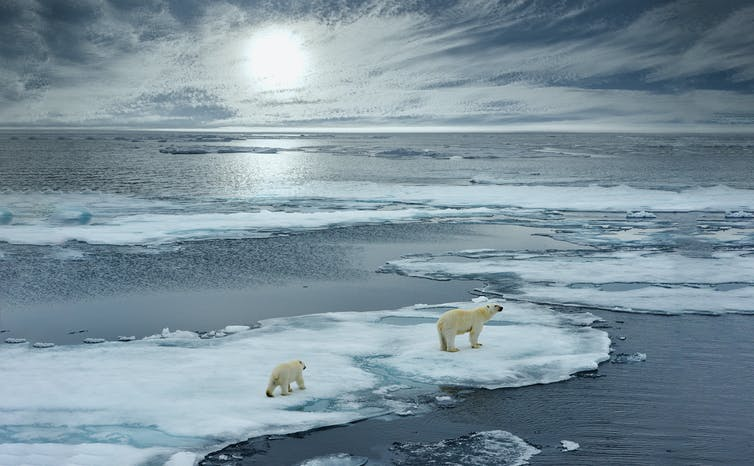 Picture of polar bears