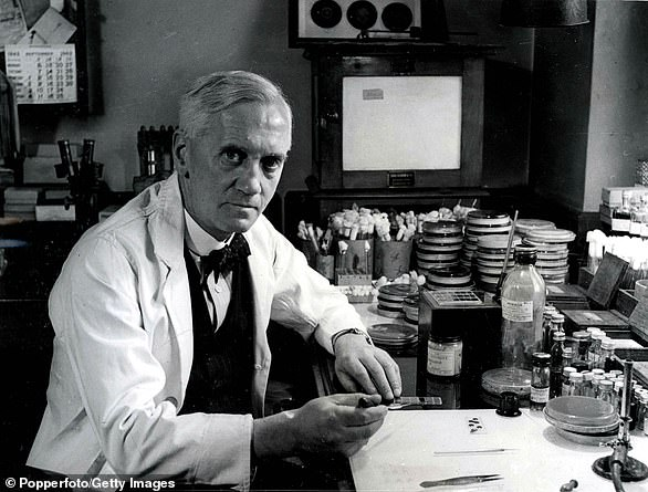 Pictured: Sir Alexander Fleming, who discovered penicillin in 1928