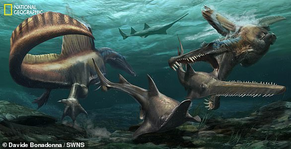 Pictured, an artist's impression from National Geographic of two Spinosaurus hunting sawfish.Adult Spinosaurus are known to reach up to 50 feet long and weight seven tons