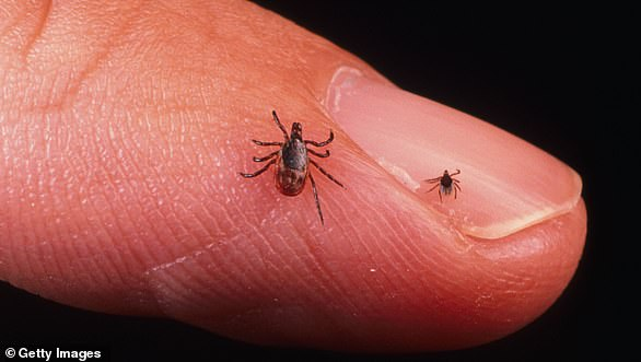 Shower as soon as possible after coming indoors to more easily find ticks and wash them off
