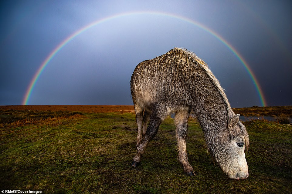'In the wake of storm Jorge and after a thunderous hailstorm, a full beautiful rainbow appeared behind the semi-feral ponies of Cefn Bryn Common,' said photographer Joann Randles of his pastoral shot in Swansea, Wales