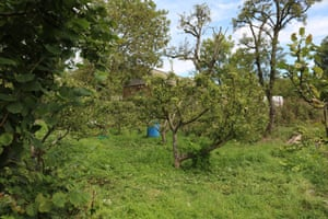 The orchard at Horsenden farm in west London, owned and overseen by Ealing council.