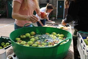 Volunteers at Horsenden Farm wash, cut and press this year's apple harvest for juice.