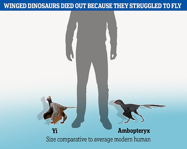 Two recently-discovered dinosaurs of thescansoriopterygid family, Yi andAmbopteryx, glided clumsily between the trees before they went extinct