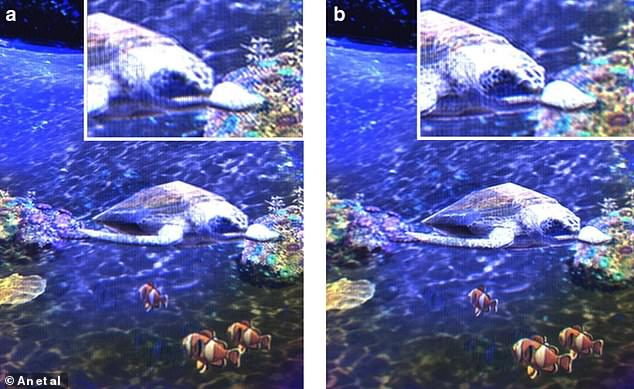 Photos from the holographic video of the turtle among the coral. All objects in the film are at different depths