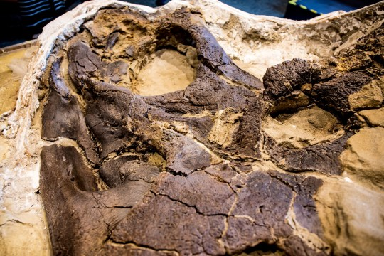 Scientists have revealed the world's first ever complete T-rex skeleton