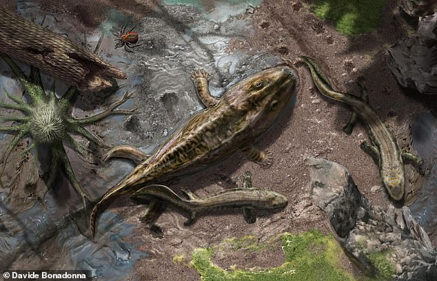 US and UK experts found that the development of the humerus — the bone that runs from the shoulder to the elbow — made the animals better walkers than swimmers. This developed led to the emergence of the tetrapods (pictured) — four-legged animals that, unlike their aquatic forebears — mostly lived on the land