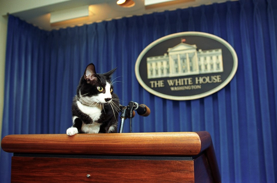 Socks the cat at the Clinton White House 1993