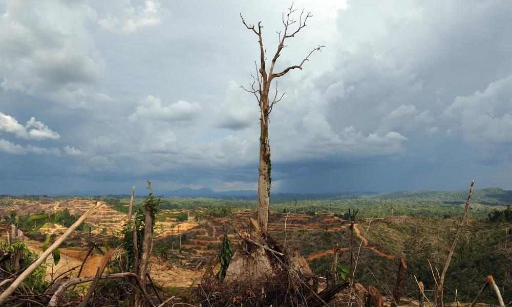 In a picture taken in August 2009, a tree stands alone in a logged area prepared for plantation near Lapok in Malaysia's Sarawak state