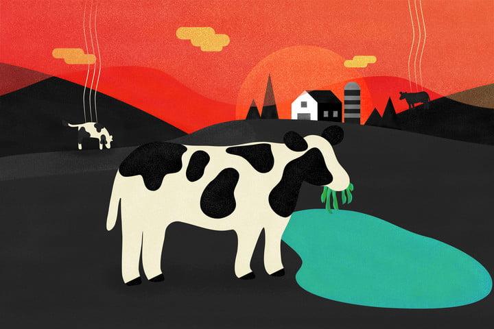 cows algae methane gas