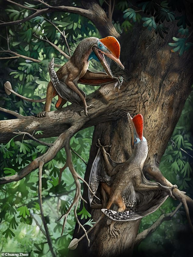 The earliest-known example of an opposed thumb has been discovered on a new species of tree-dwelling flying reptile (depicted above) that lived in China 160 million years ago