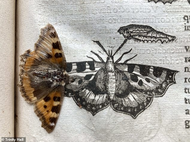Trinity College said the butterfly 'is as colourful as the day it was pressed between the book's pages'