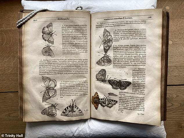 The simple act of inserting the specimen between the pages would allow insects to be preserved for hundreds of years