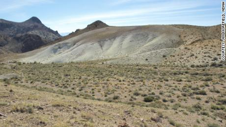 Tiehm's buckwheat was discovered in 1983. It only grows in a small section of Nevada's desert.