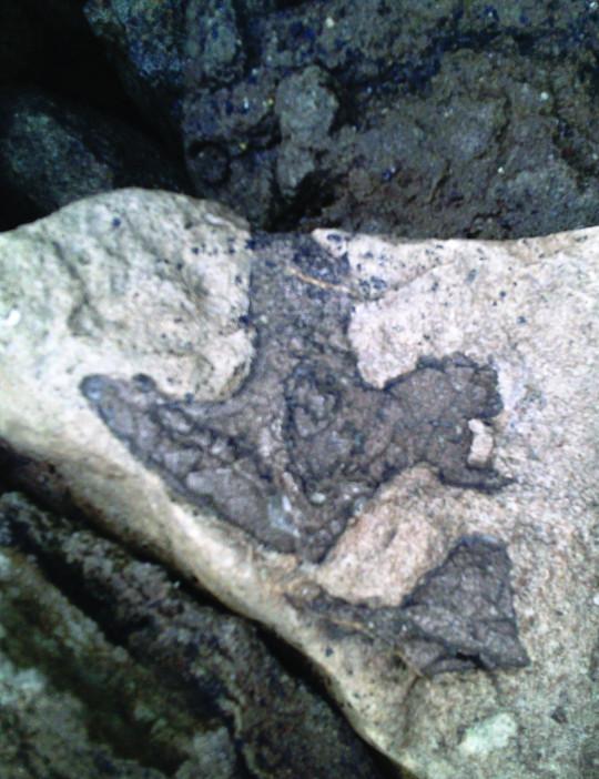 A tridactyl dinosaur footprint (Credits: PA)